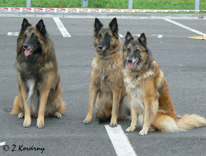 Tři polosourozenci aneb potomnci slavné a úžasné Adinky